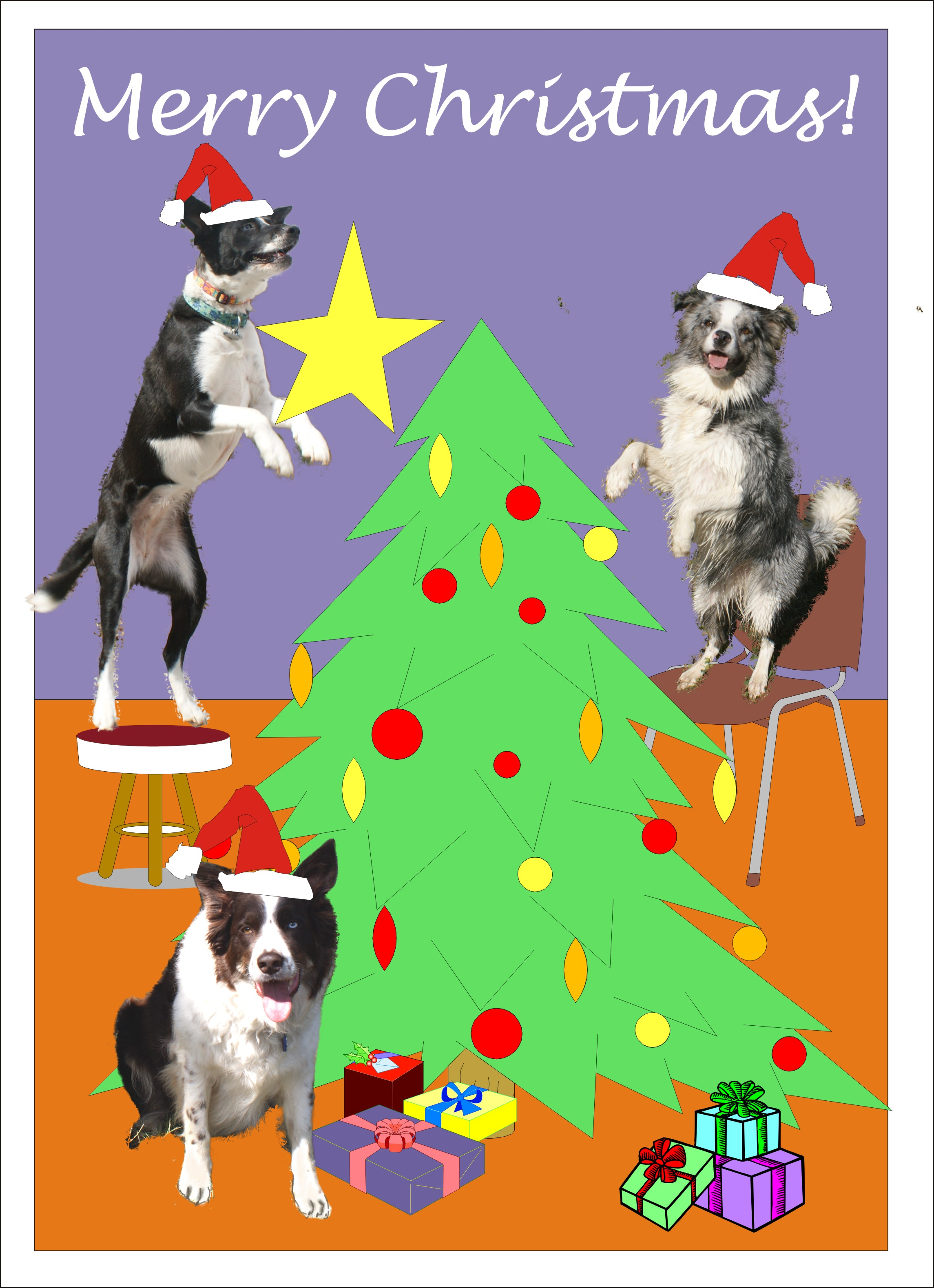 Leaping Christmas Border Collies - $2.75 : Muddy Paws Greeting Cards